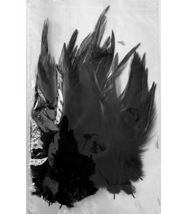 Plumas gallo negro
